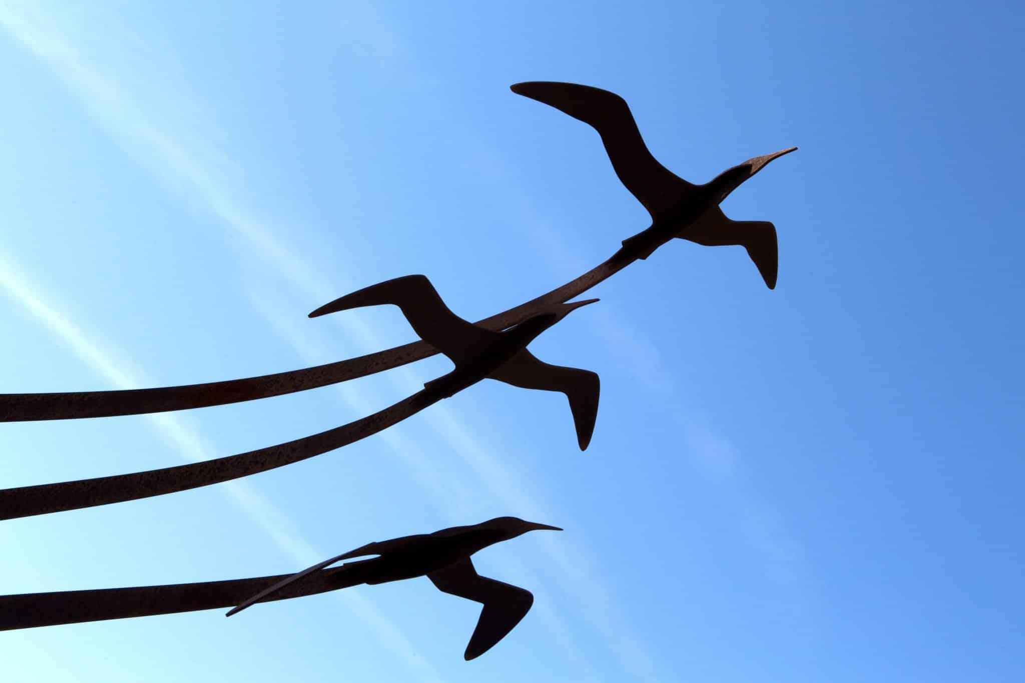 3 oiseaux dans le vent